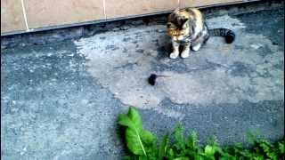 что может мышь загнанная в угол кошкой.