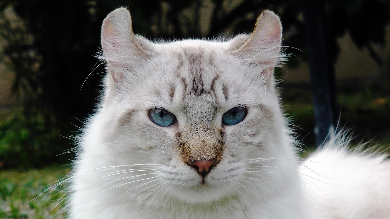 Hybrid Cats As Pets