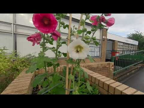 VR180° Bee's plundering the flowers, Sheffield