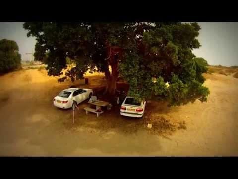 quadcopter-Tree
