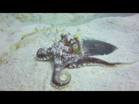 Discover Barbados Underwater