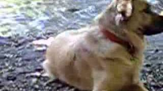 Daisy, Ada Service Dog