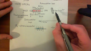 Introduction to G-Protein-Coupled Receptors Part 1
