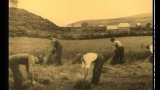 Irish linen and flax growing