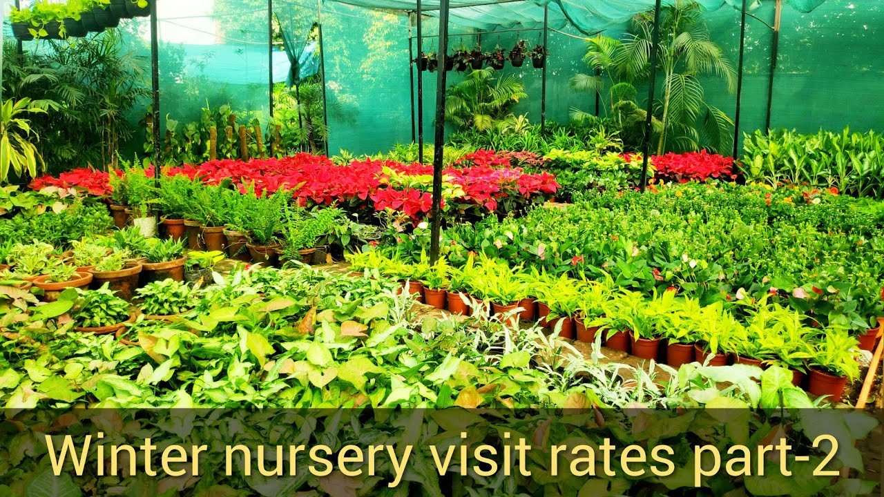 Winter Nursery Visit 2019 20 Part 2 Plants Rates At Flowers Names N Prices