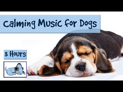 3 and a Half Hours of Calming Music for Dogs!