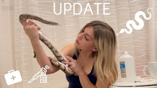 Rescued python gets antibiotic injections! UPDATE VIDEO!