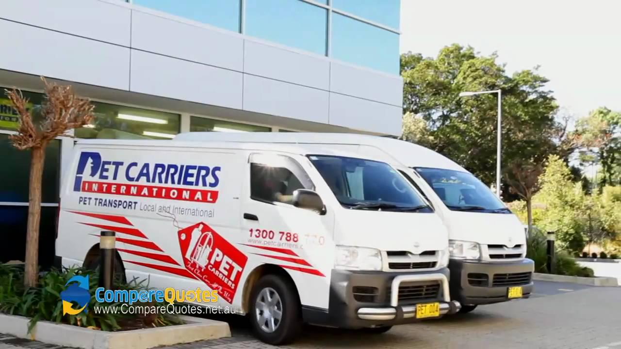 Pet Carriers International Pet Transport Moving Pets Moving