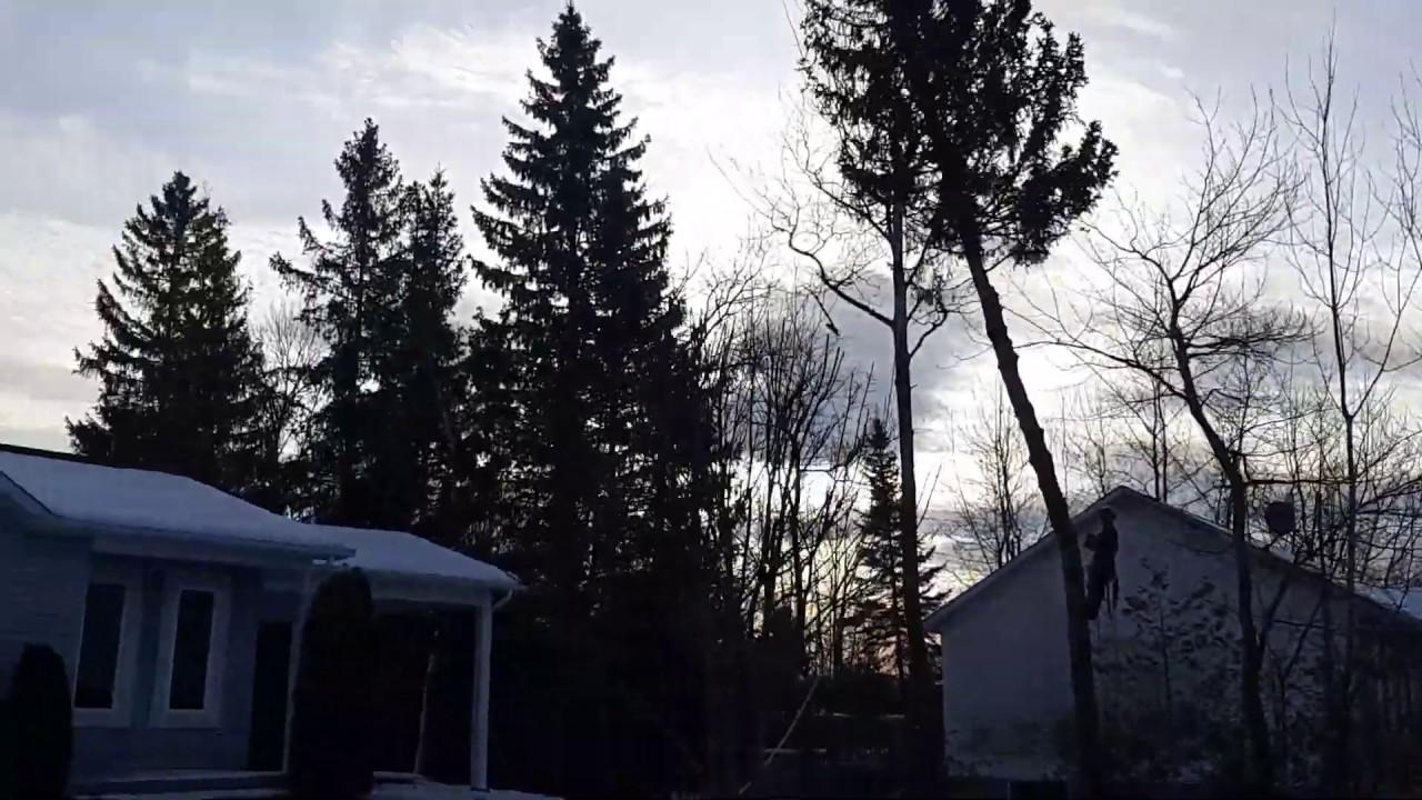 Comment Fixer Une Balançoire À Une Branche D Arbre emondage,elagage,service d'entretien d'arbres à magog