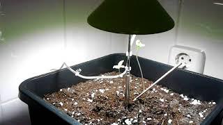 Mini led groei lampje 7 watt voor 1 plantje ?
