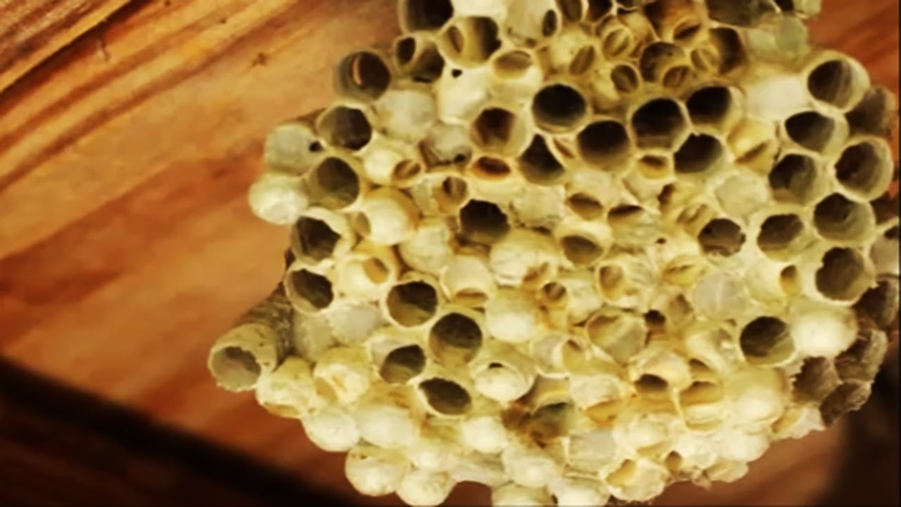 Trypophobia Everyday Household Items The Fear Of Irregular Holes