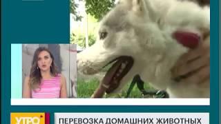 Перевозка домашних животных. Утро с Губернией. 25/06/2018. GuberniaTV