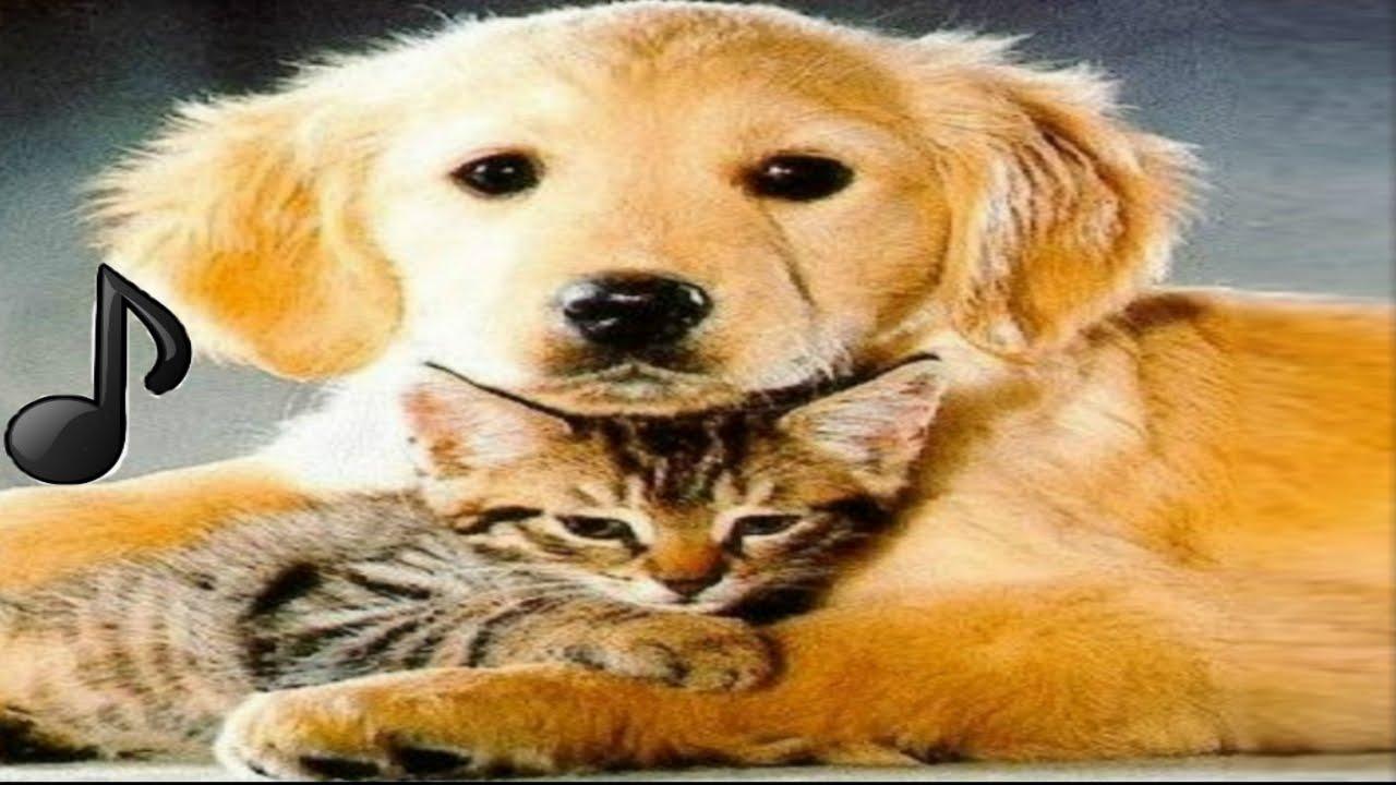 Frases Com Animais De Estimação Para Facebook: Música Para Relaxar Cães, Gatos, Animais De Estimação