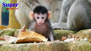 Baby monkey crying - Baby monkey Jayden was weaning milk very hurting