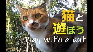 猫と遊ぼう Play with a cat