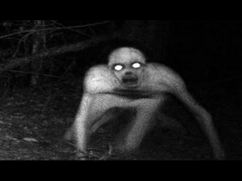 5 Unexplained Creatures Caught On Camera Unexplained Mysteries