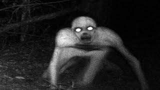 5 Unexplained Creatures Caught On Camera Unexplained Mysteries