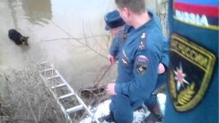 Спасение собаки из ледяной воды (МЧС)