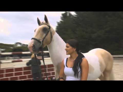 Сайт о лошадях - Мой Конь, лошади, все о лошадях, разные