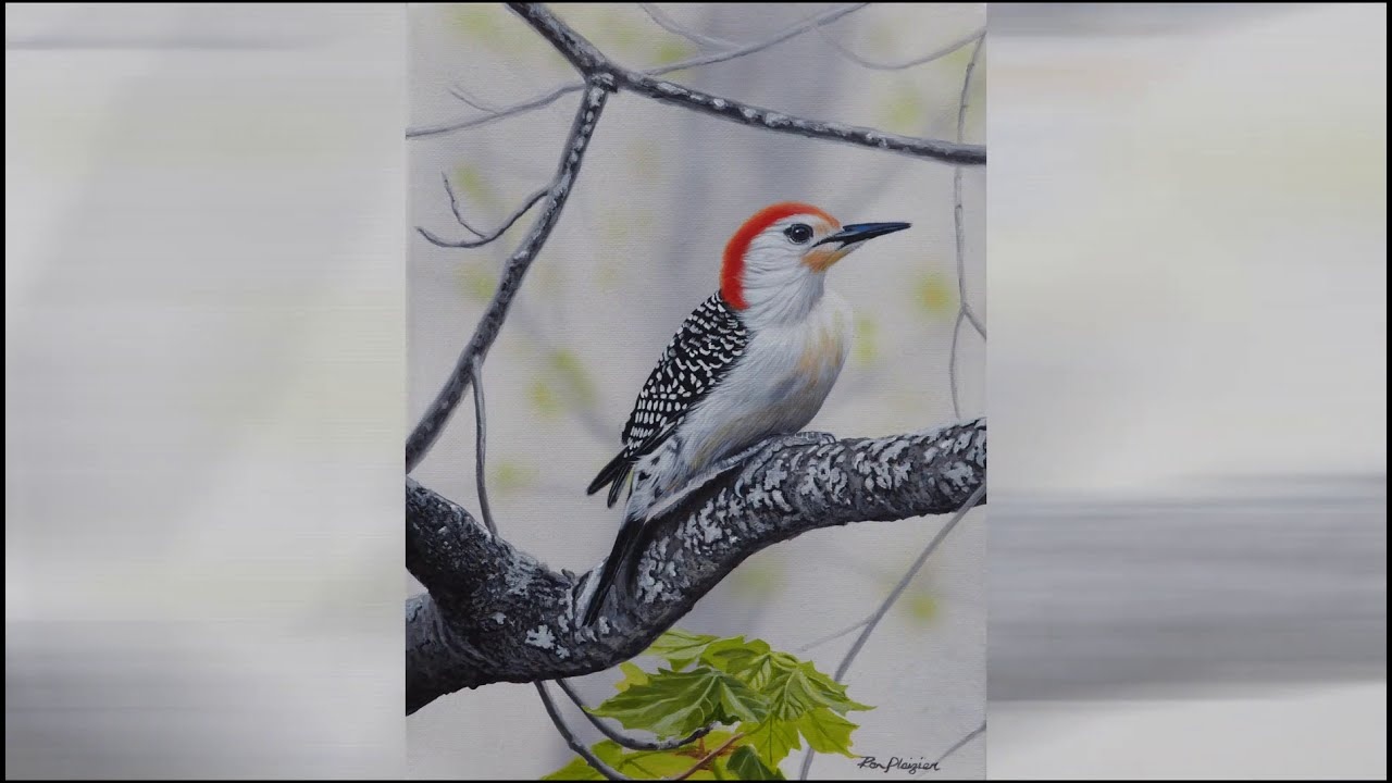 Painting of a Red-bellied Woodpecker