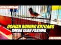 Ocehan Burung Kutilang Gacor Full Isian Panjang  Mp3 - Mp4 Download