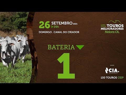 BATERIA 1 - LEILÃO VIRTUAL DE TOUROS 2021 NELORE OL - CEIP