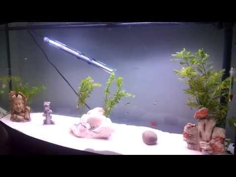 Fluval Vicenza 260 65 Gallon Freshwater  Aquarium
