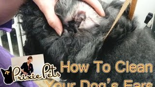 Dog Ears - The Best Way to Clean and Remove Hair
