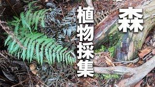 テラリウム、パルダリウム の為の植物を森で採集!撮影はGoPro HERO7 Black