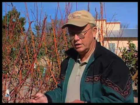 how-to-prune-fruit-trees-properly