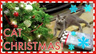 CAT CHRISTMAS 2014! | CHRIS & EVE