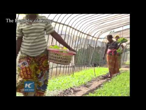 Chinese greenhouses stimulate african agriculture