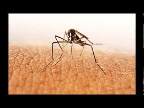 Remedios caseros para las picaduras de insectos como - Como combatir las moscas ...