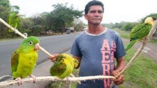 Inside Illegal Wildlife Trade