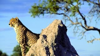 Reisevideo Kenia