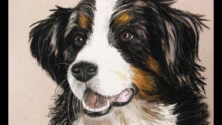 Hund zeichnen bunt mit Pastellkreide / dog drawing soft pastels speed drawing