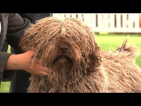Windsor Championship Dog Show 2014 – Gundog group