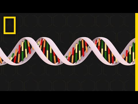 Genetics 101 | National Geographic