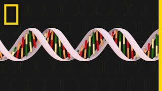 National Geographic: Genetics Overview thumbnail