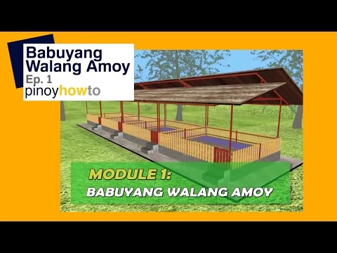 How to Raise Pigs: Babuyang Walang Amoy or Odorless Pigpen Episode 1   Pinoy How To