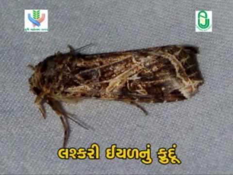 Integrated pest control (સંકલિત જીવાત નિયંત્રણ)