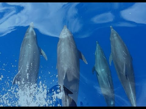 Maddalena Bearzi — Aquarium Lecture Series