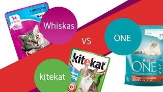 Какой корм для котов лучше? Ответ в этом видео!