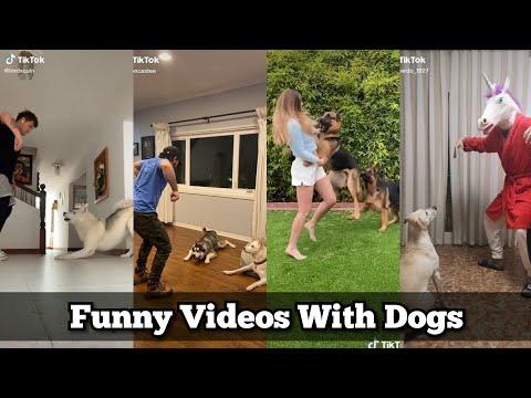 Kudiki takati, Kudiki taka ta |Funny Tiktok Challenge|Kulikitaka,Culiquitaca Dj Song|Tiktok with Dog
