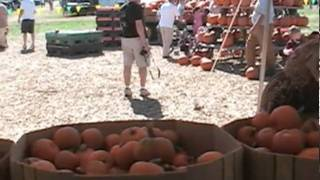 Fall Fun at Gentry's Farm in Franklin, TN - tnhomeandfarm.com