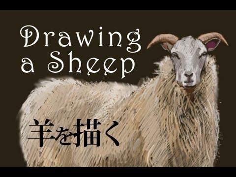 羊の絵を描く Drawing a Sheep ...