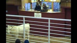 USDA-AMS-LGMN National Feeder Cattle Summary 06-13-2014