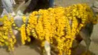 SANGHOI JHELUM (SHADI KHANA BARBADI)