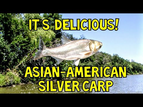ASIAN CARP, How to Catch-Clean-Cook! Delicious Carp Recipe. Best Carp Recipe.