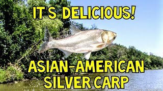 ASIAN CARP, How to Catch-Clean-Cook!